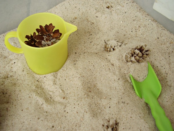 Dig up small pine cones in the sandbox