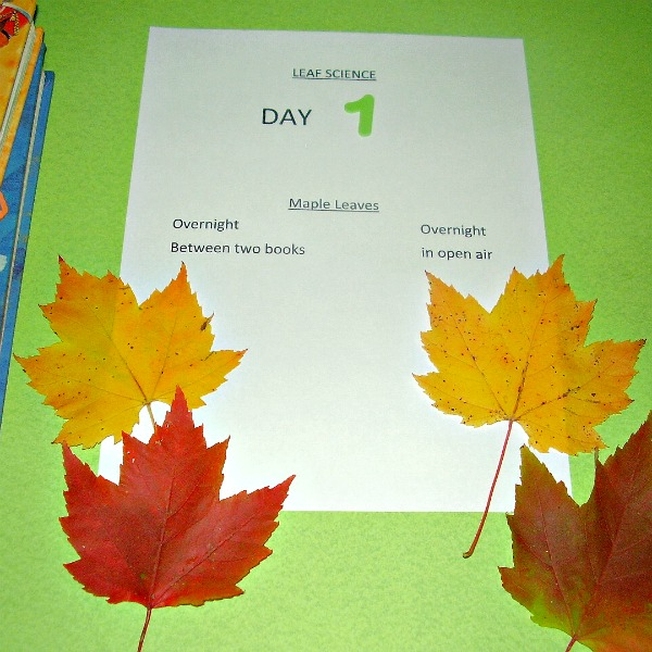 Kids fall activity leaf science