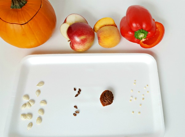 Match the food to its seeds