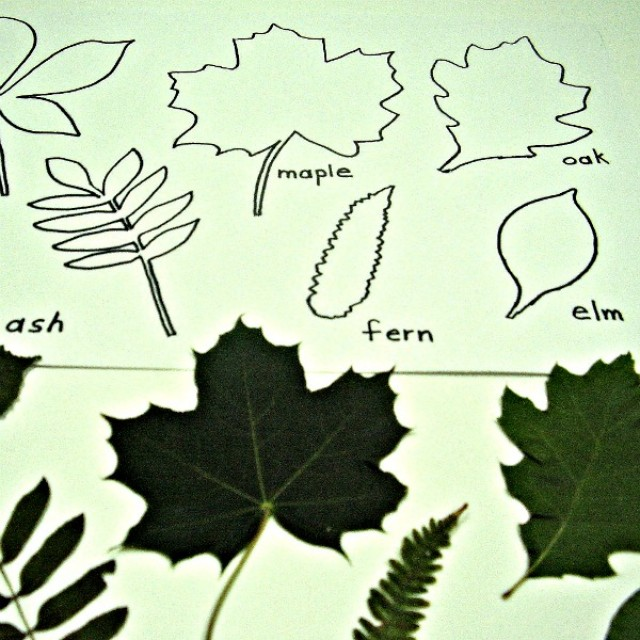 Matching leaves shapes preschool math activity