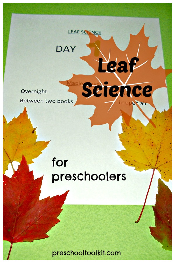 Fall leaves science activity for kids