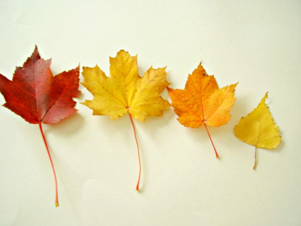 Sort leaves by size from largest to smallest.