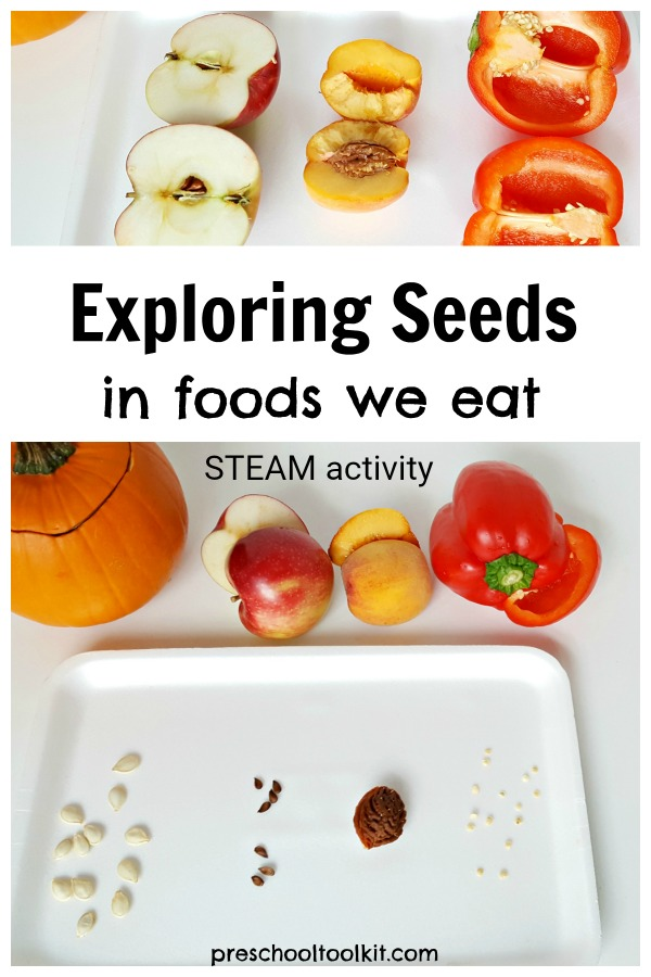 exploring seeds in foods we eat preschool activity