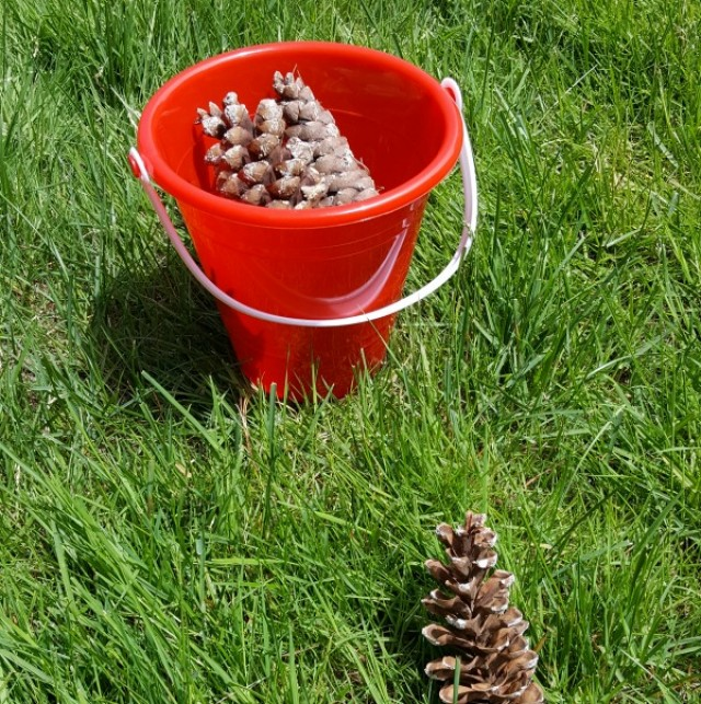 Pine cone trail outdoor activity for toddlers and preschoolers from preschooltoolkit.com
