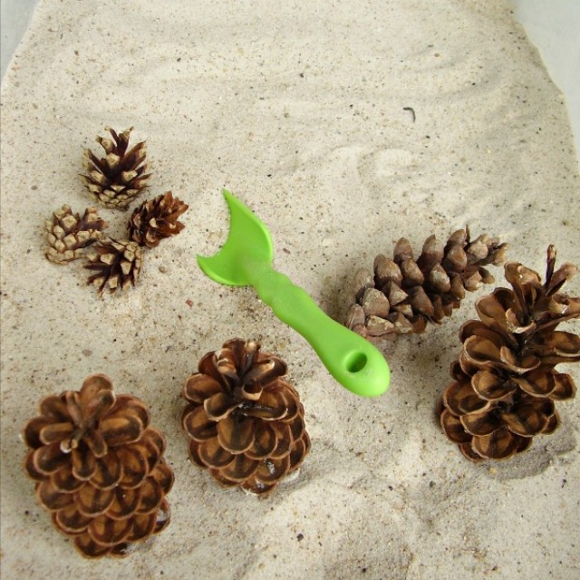 Pine cones in the sandbox sensory activity for preschoolers